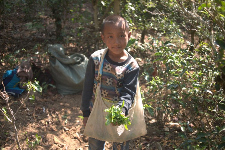 A boy and his leaves - Copyright Don Mei 2015