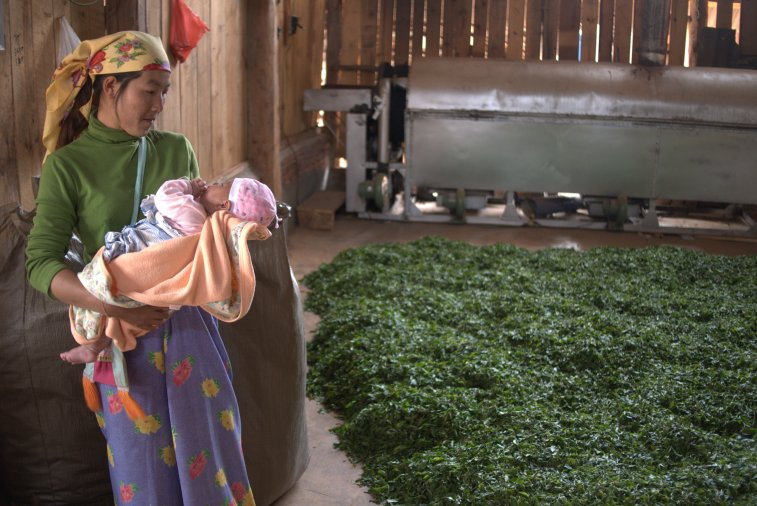 A tea picker, her baby and her leaves - Copyright Don Mei 2015