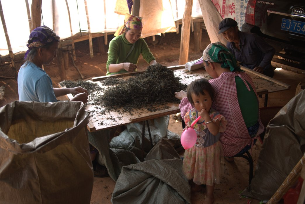 Local family sorting tea - Copyright Don Mei 2015